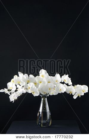 White orchids in glass vase isolated on black background