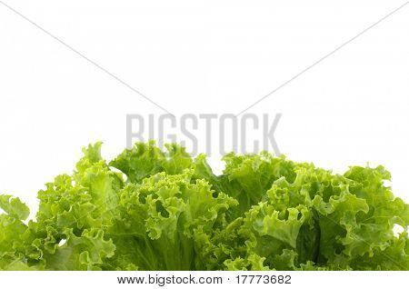Lettuce. Green salad on a white background