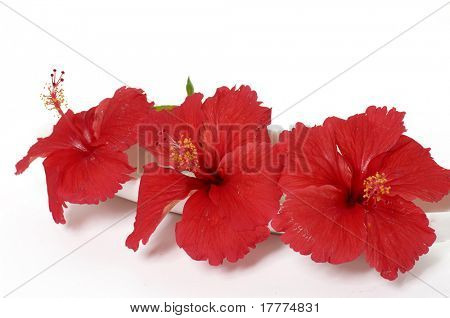 red flowers against white background