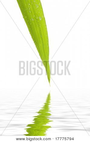Bamboo leaf reflected in rendered water