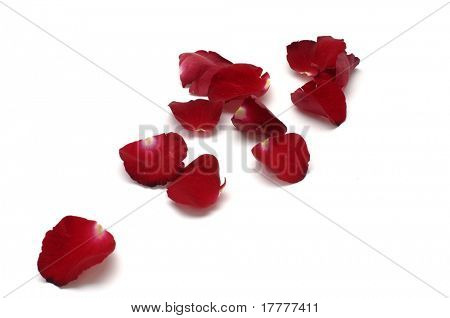 red petals isolated on whit