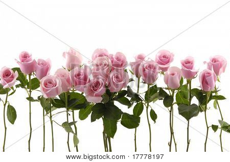 Beautiful Roses Bouquet
