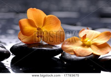 still life with orange flower with water drops