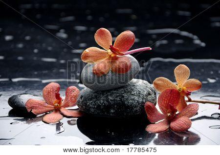 Still life â??orange orchid and stone