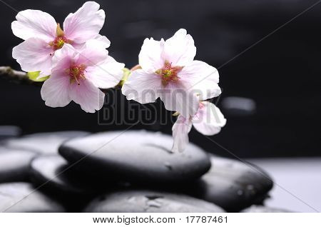 still life with Black stone and white cherry