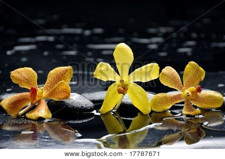 still life with three orchid flower with water drops