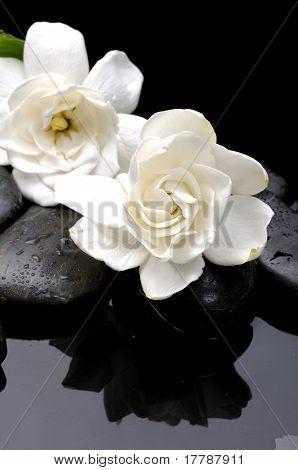 wellness and health /massage stones and gardenia flower