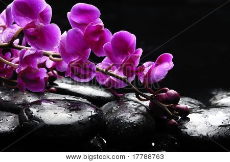 Zen stone and pink orchid with reflection