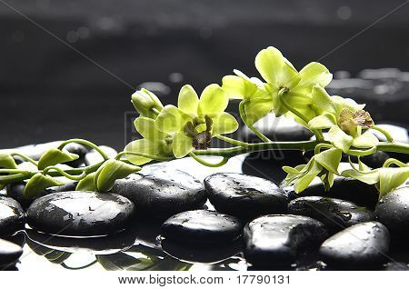 Spa still life with green orchid on pebble in water drops