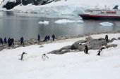 Tourists Photographing Gentoo Penguin poster