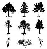 stock photo of six-petaled  - Collection of 6 trees - JPG