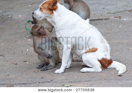 Monos comprobando las pulgas y garrapatas en el perro