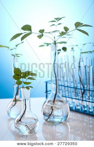 Plants growing in test tubes in a research laboratory