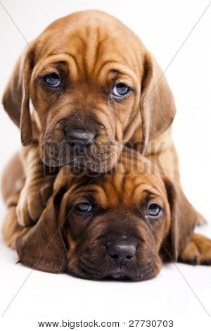 Baby dogs