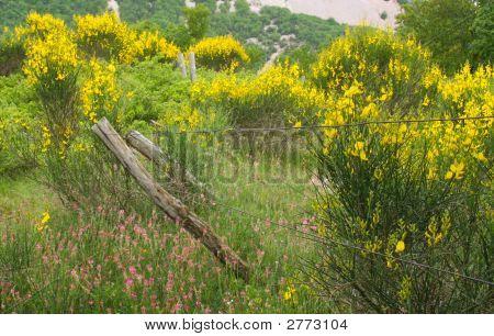 Broken Fence, Flourishing Field