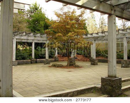Arboretum Courtyard