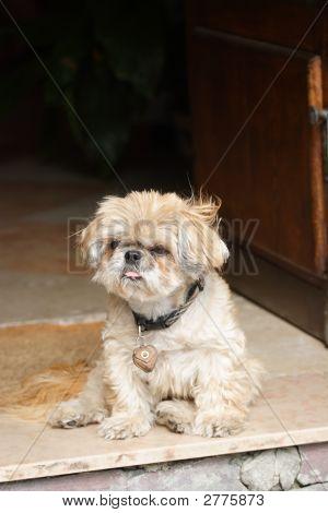 Little Shaggy Dog Sitting In A Door Frame #1