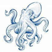 Vintage Octopus. Hand Drawn Squid Engraved Ocean Animal. Etching Octopus Vector Illustration. Squid  poster