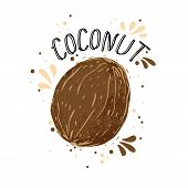 Vector Hand Draw Coconut Illustration. Brown Coconuts With Juice Splash Isolated On White Background poster