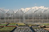 Nusery Greenhouses