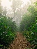 Hiking Path In Green Rain Forest At Mon Jong Doi, Chaing Mai, Thailnadhiking Path In Green Rain Fore poster