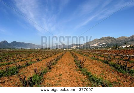 Vineyards Of Spain In Early Season. Vines Cut To The Core. Sunny Blue Skies And Converging Lines