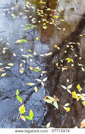 Yellow Falled Leaves In Rain Puddle