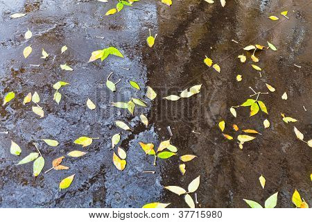 Yellow Falled Leaves In Rain Urban Puddle