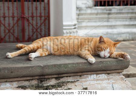 A Cat Lying.