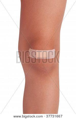Human Knee, Sealed Plaster