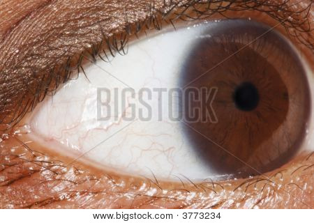 Eye Ball Close Up