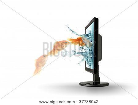 Goldfish jump into computer monitor