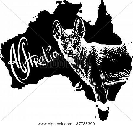 Dingo como símbolo australiano