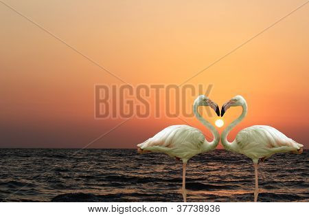 Beautiful And Romantic Flamingo Couple Enjoying Together At A Beach