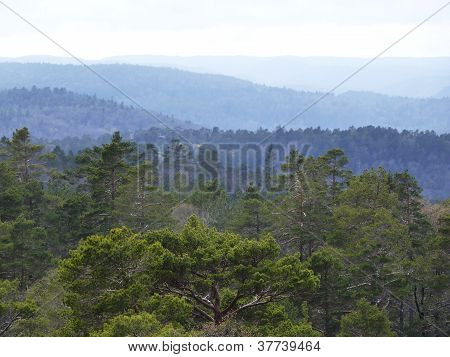 View Over Forest With Cloudy Sky
