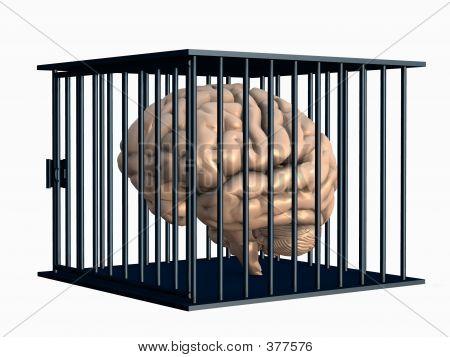 Cérebro humano, fechado em gaiola