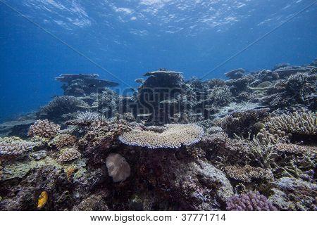 underwater reef system