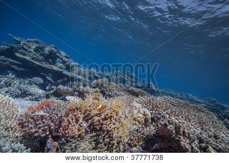 reef scape