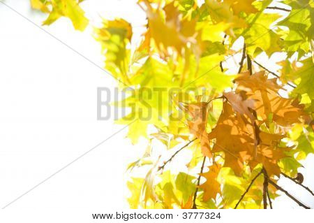 Autum Leaves Over White