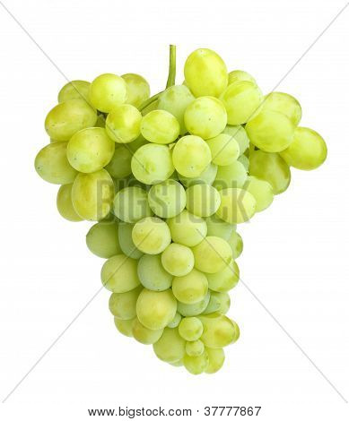White Grapes Isolated On White