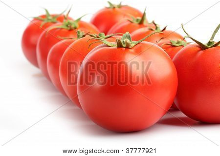 Rows Of Red Tomatoes