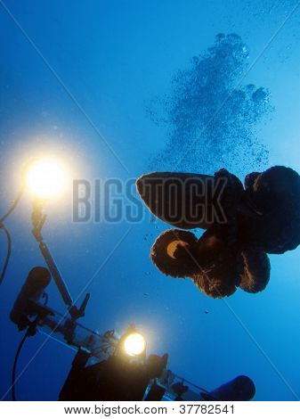 Octopus and Diver