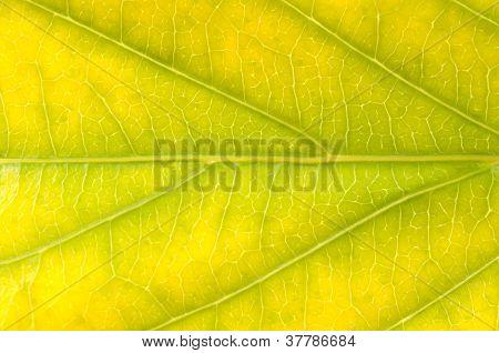Fallen Yellow Leaf Texture Macro