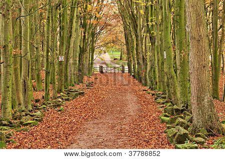 Nature Walk Tunnel