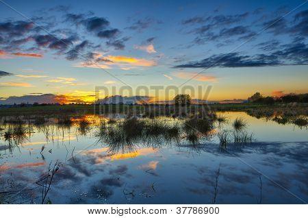 Swamp scenics view