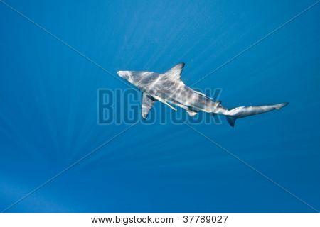 shark in dappled light