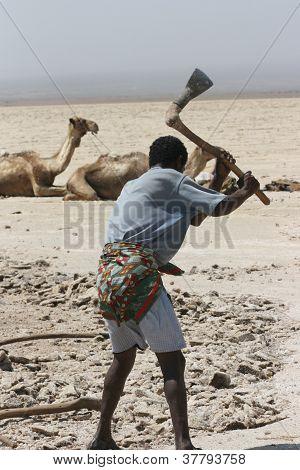 An Afar tribesman digging salt in the desert
