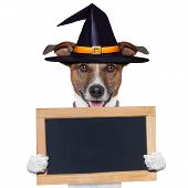 picture of scared baby  - halloween placeholder banner dog with witch hat - JPG
