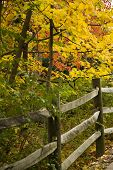 stock photo of split rail fence  - Beautiful red orange and yellows colors of autumn along a split rail fence - JPG
