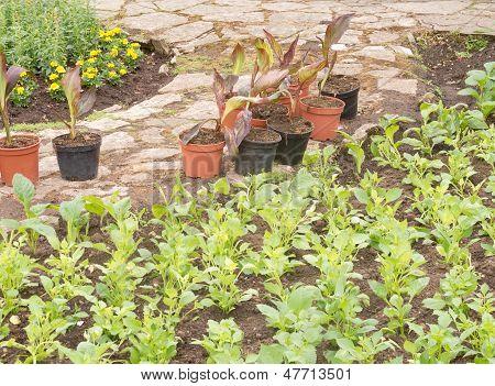Planting Spring Plants